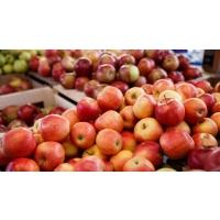 Рост цен на яблоки остановился, и даже демонстрирует тенденцию к падению
