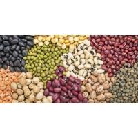 Производство бобовых культур увеличивается