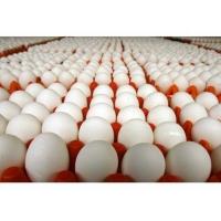 Производство куриных яиц остается прибыльным бизнесом