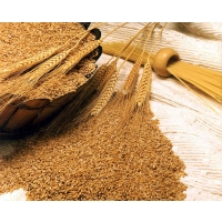 Нужно ли Украине наращивать экспорт зерна?