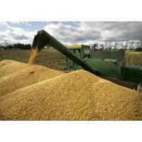 Метаморфозы кукурузных цен
