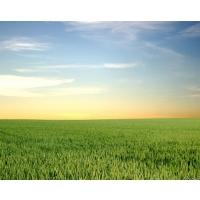 Влияние тренда низких цен в растениеводстве