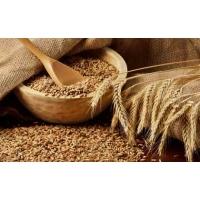Как долго продержится рост цены на пшеницу?