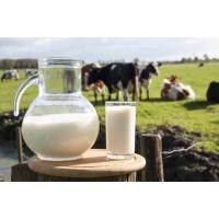 Молочный фальсификат: употреблять или бороться?
