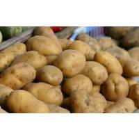 Картофель на экспорт: что для этого нужно