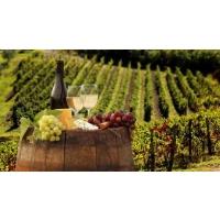 Виноделы могут проиграть конкурентную борьбу, если пустять дело на самотек