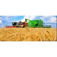 Проблемы зерноперевозок, товар есть, хопперов нет