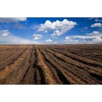 Выбор пути: развитие фермерства или ставка на агрохолдинги