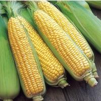 Кукуруза о себе еще заявит