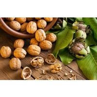 Грецкие орехи: дело нелегкое, но рентабельное
