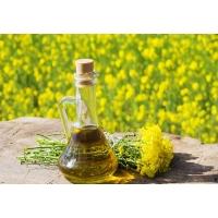Рапсовое масло: производство и спрос растут