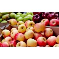2018 год в Украине ожидается урожайным на яблоки
