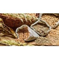 Аграрный экспорт – дело выгодное