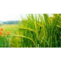 В Украине снижается рентабельность продукции растениеводства
