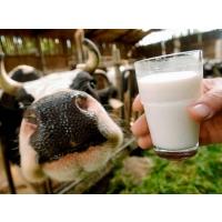 Увеличилось производство молока