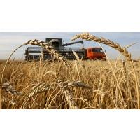За два месяца экспортировано 5 млн тонн зерна