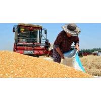Украина сохранит шестое место среди мировых экспортеров зерна