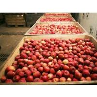 Мощности по хранению яблок соответствуют потребности