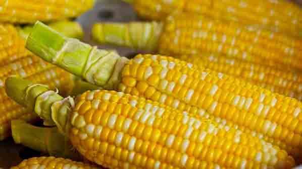 Электроэнергия из кукурузы