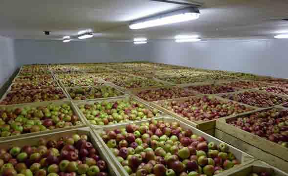 Новые холодильники для фруктов