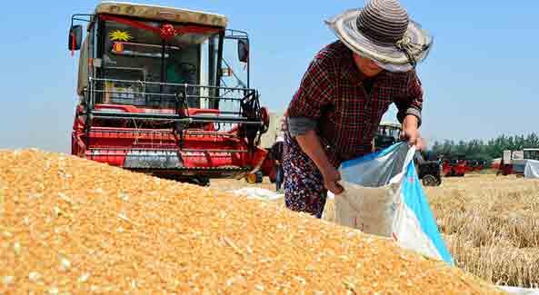 Зерновая группа среди лидеров отечественного экспорта