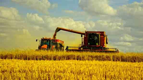 Потребление увеличится, а урожай уменьшиться