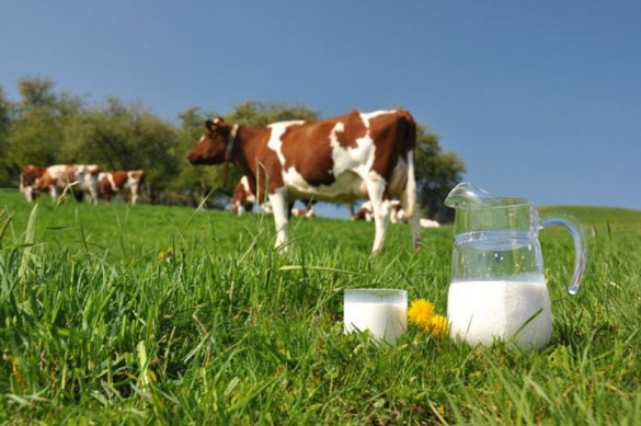 Молочная индустрия или молочные кооперативы?