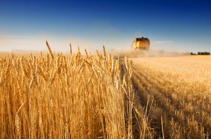 Аграрная самооборона и правоохранительные органы совместными усилиями предотвратили рейдерский захват урожая на Николаевщине
