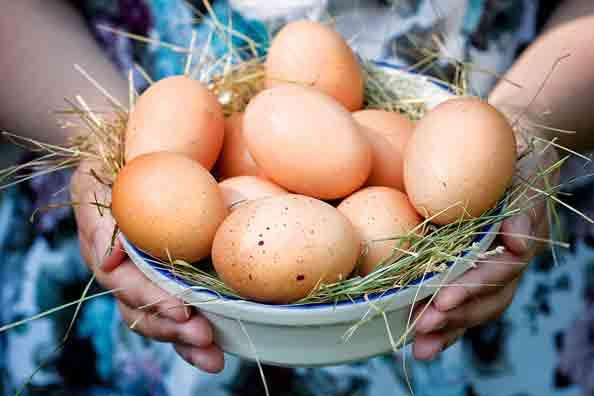 Украина увеличивает экспорт яичной продукции