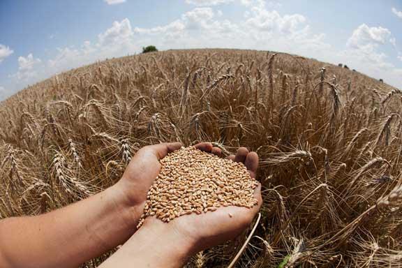 Украина демонстрирует уверенное расширение экспорта