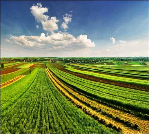 Под угрозой ареста оказались 1,8 миллиона гектаров  выморочных угодий